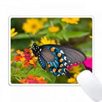 レッドスプレッドのPipevine Swallowtail Lantana、Marion Co. IL PC Mouse Pad パソコン マウスパッド