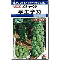 芽キャベツ 種子 早生子持 キャベツ (2ml)