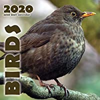 Birds 2020 Mini Wall Calendar