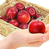 国華園 青森産 アルプス 乙女 3kg1箱 りんご