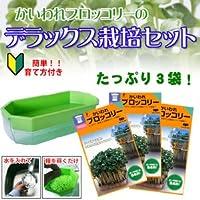 ブロッコリースプラウト 栽培セット 【 種3袋と栽培容器付 】