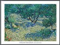 ポスター フィンセント ファン ゴッホ Olive Orchard 1889 額装品 アルミ製ベーシックフレーム(ブラック)