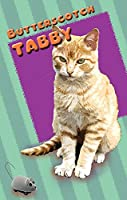 Seek Publishing Butterscotch Tabby–ペットKardlet ( pkbttr )