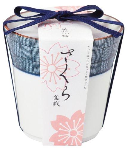 染付小紋盆栽栽培セット 桜 GD-45202