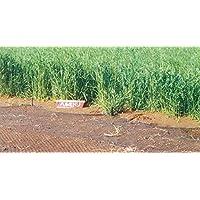 緑肥 ライ麦 ハルミドリ 1kg