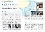 日本の渡り鳥観察ガイド (BIRDER SPECIAL) 画像