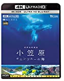 世界自然遺産 小笠原 【4K・HDR】~ボニンブルーの海~ [Ultra HD Blu-ray]