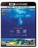 ビコム 4K Relaxes 世界自然遺産 小笠原 ~ボニンブルーの海~[Ultra HD Blu-ray]