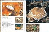 ウミウシ (たくさんのふしぎ傑作集) 画像