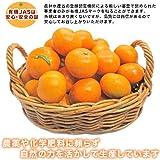 【愛媛県宇和島産 有機JASみかん】送料無料 5kg (サイズ不揃い)