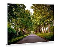 キングスアベニュー、サンドリンガム、ノーフォーク、イギリス、木、道路 - 壁の絵 壁掛け ソファの背景絵画 壁アート写真の装飾画の壁画 旅行 風景 景色 - (60cmx40cm)