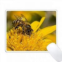 花粉嚢、リトルナマクアランド、南アフリカのアフリカンハニーミツバチ。 PC Mouse Pad パソコン マウスパッド