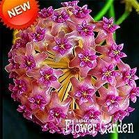 22:大プロモーション!バルコニー鉢植えの花HOYA種子、ダークホーヤカルノーサの種子、蘭の種25色ご利用いただけます100個/パッケージ、#Na30Tg