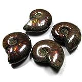 [adgadg] 4個組 27-25mm 計135ct マダガスカル産遊色アンモナイト 化石 希少 5349