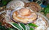 今が食べごろ!!あま〜いホタテ殻付・・・宮城県・女川より復興前進・三陸産・活ほたて10枚(1枚あたり220g前後)獲れたてぷりぷり食感