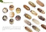 ダンゴムシの本 まるまる一冊だんごむしガイド~探し方、飼い方、生態まで 画像