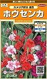 サカタのタネ 実咲花7590 ホウセンカ カメリア咲き混合 00907590 10袋セット