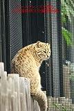 オールドレンズで撮る井の頭自然文化園動物園