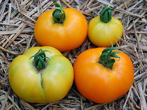 【SEED】Heirloom TomatoR Hazel Gold エアルーム・トマト・ハゼル・ゴールド (15 seeds)OR-15