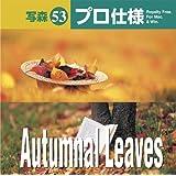 写森プロ仕様 Vol.53 Autumnal Leaves