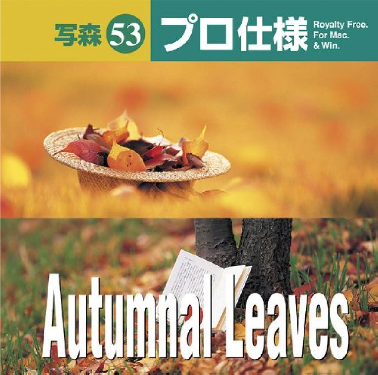 事故バランス序文写森プロ仕様 Vol.53 Autumnal Leaves