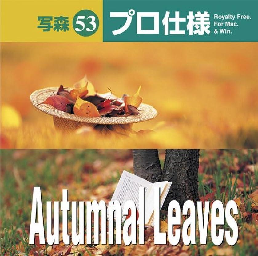 外交恥忘れっぽい写森プロ仕様 Vol.53 Autumnal Leaves