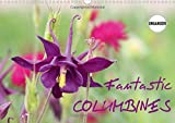 Fantastic Columbines 2017: The Variety of Granny's Bonnet or Columbine is Remarkable (Calvendo Nature)
