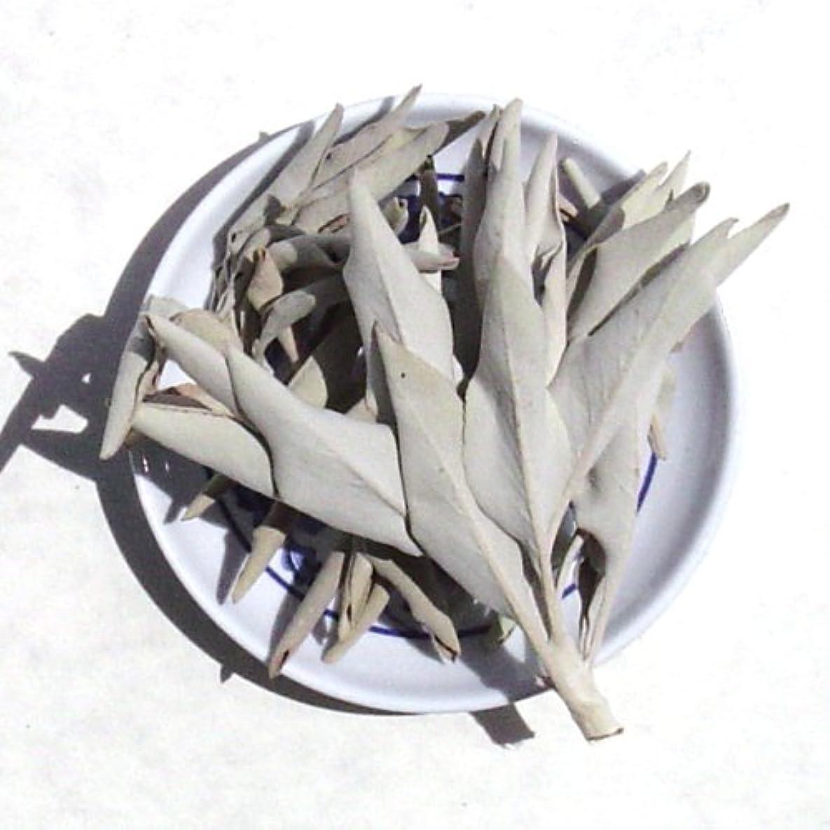 危険にさらされている息切れ違反ホワイトセージLoose Incenseクラスタ – Sold As 1ポンドパッケージ