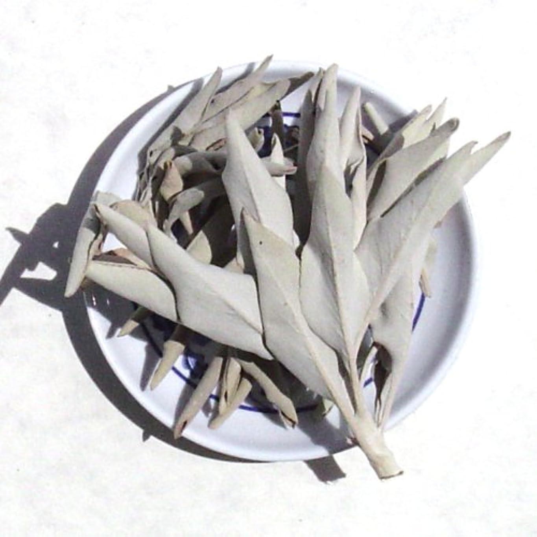 差し迫った手順風味ホワイトセージLoose Incenseクラスタ – Sold As 1ポンドパッケージ