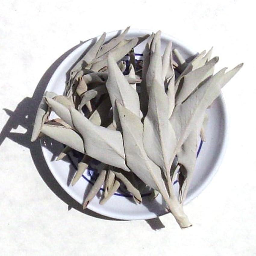 終了する貸すまぶしさホワイトセージLoose Incenseクラスタ – Sold As 1ポンドパッケージ