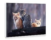 オレンジとグレーの猫の親密な写真 - 壁の絵 壁掛け ソファの背景絵画 壁アート写真の装飾画の壁画 動物 - (50cmx35cm)