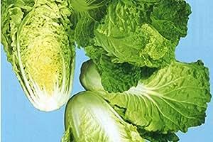 極早生白菜(レタサイ)(生食できる白菜)福岡産