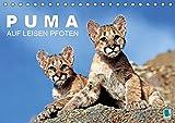 PUMA Puma: Auf leisen Pfoten (Tischkalender 2019 DIN A5 quer): Pumas: Geschmeidige Raubkatzen (Monatskalender, 14 Seiten )