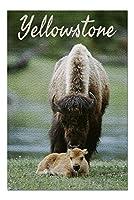イエローストーン–Bison and calf–Photography (ジェームズ・T・ジョーンズ) ( 20x 30プレミアム1000ピースジグソーパズル、アメリカ製。 )