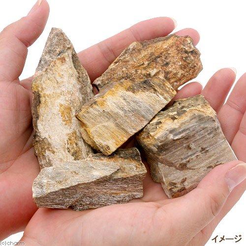 木化石 SSサイズ (5個入り)