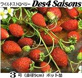 いちご苗・ワイルドストロベリー Des4 Saisons (直径9cmポット苗)3ポットセット