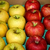 訳あり りんごおすすめ2品種詰合せ Cランク (家庭用) 約10kg [CA貯蔵] 長野産(24玉~36玉)