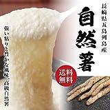 長崎県五島列島産 自然薯 山芋 無農薬栽培 送料無料 計2kg (2本)