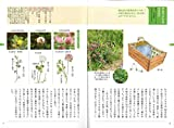 野草の名前 春 和名の由来と見分け方 (ヤマケイ文庫) 画像