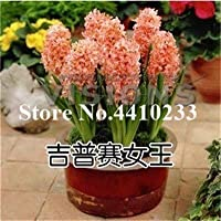 ホームのために200個のカラフルな盆栽、花の鉢植え、屋内簡単ポットで成長、盆栽花:8