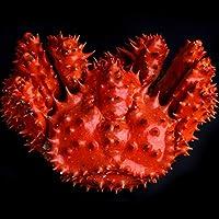 特大サイズ 花咲ガニ 姿 [1.3kg前後] ギフト 内祝い 蟹 かに