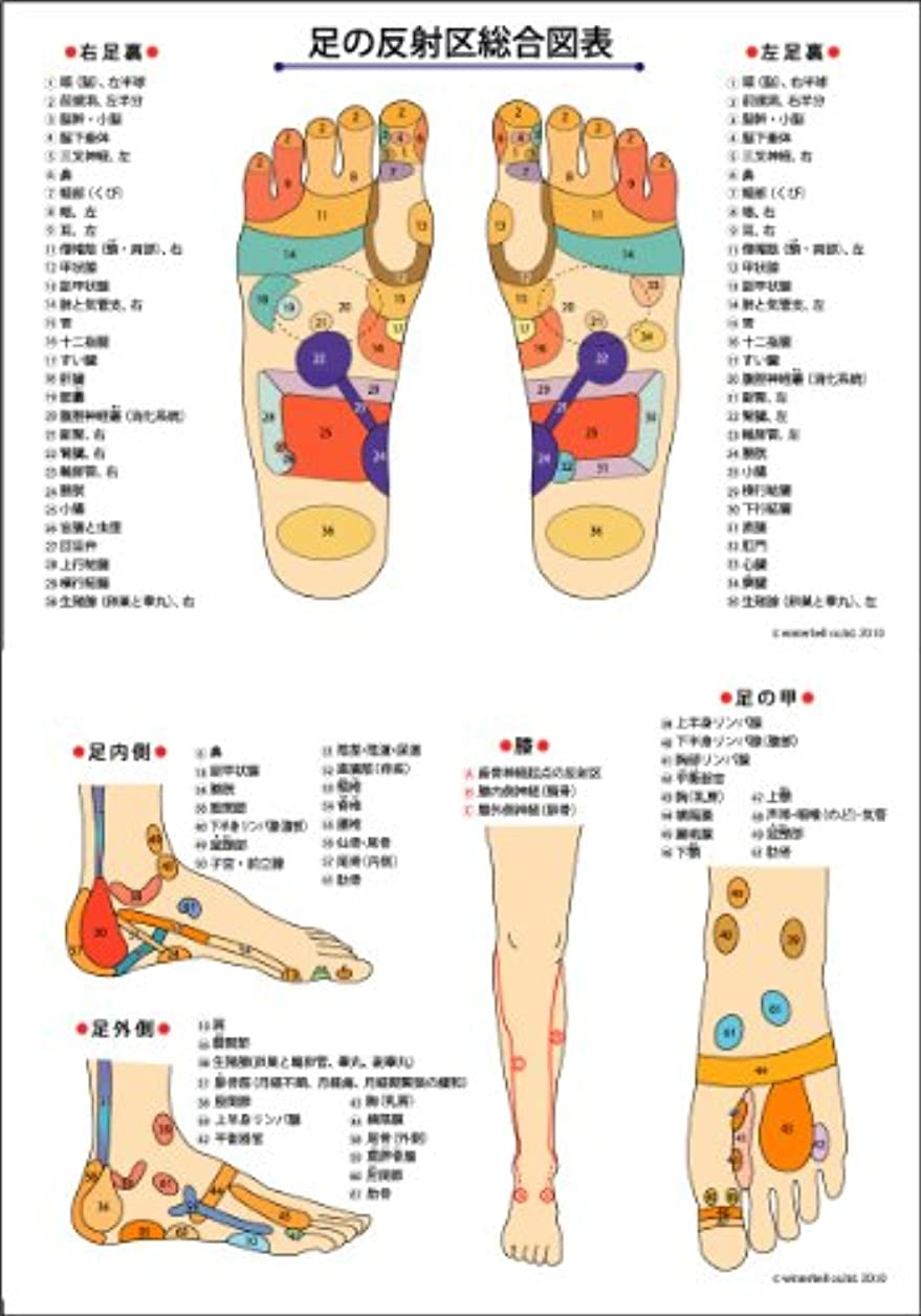 立ち寄る抵抗入学する反射区ポスター(A2サイズ) 症状別反射区一覧付き(裏面)