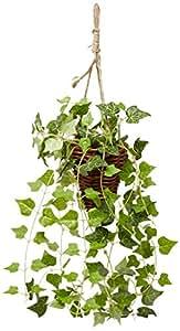 吊るして飾る インテリアグリーン 光触媒 加工 アイビー ハンギング