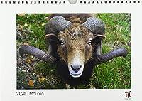 Mouton 2020 - Édition blanche - Calendrier mural Timokrates, calendrier photo, calendrier photo - DIN A4 (30 x 21 cm)