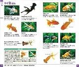 魚 (小学館の図鑑 NEOポケット) 画像