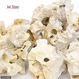 化石サンゴ M(ベース用)1個 20~25cm