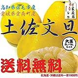 土佐文旦10K (家庭用)4L~2Lサイズ高知産または、愛媛産