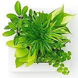 壁に掛ける観葉植物ミドリエデザイン フレームホワイト16A