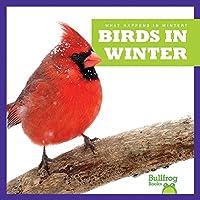 Birds in Winter (What Happens in Winter?)