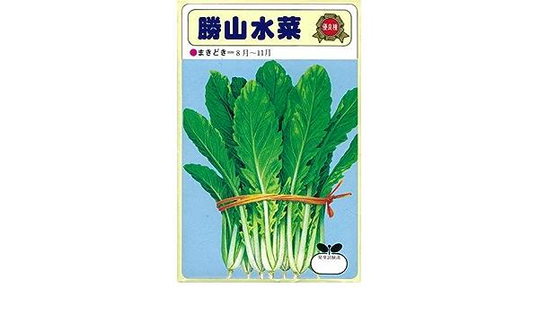水菜 勝山 わがふるさとの自慢の野菜